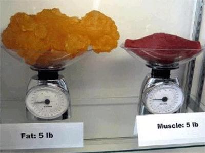 지방-vs-근육-부피-차이